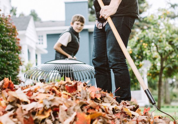 Father and son raking leaves in yard